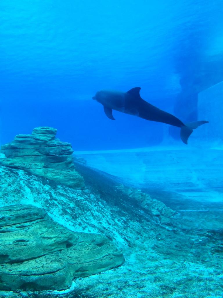самый большой океанариум в мире сингапур sea aquarium