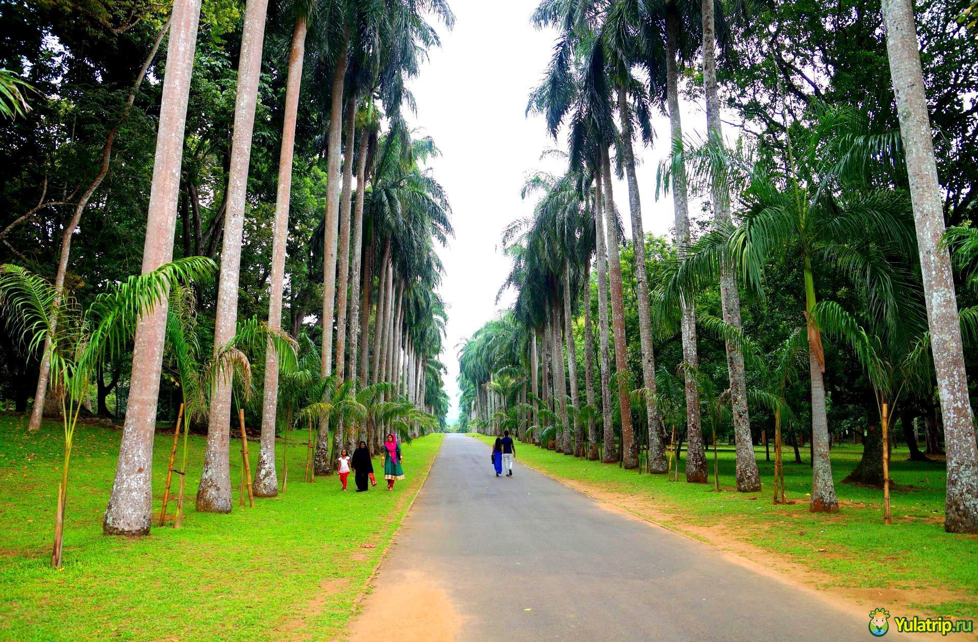 королевский ботанический сад шри ланка