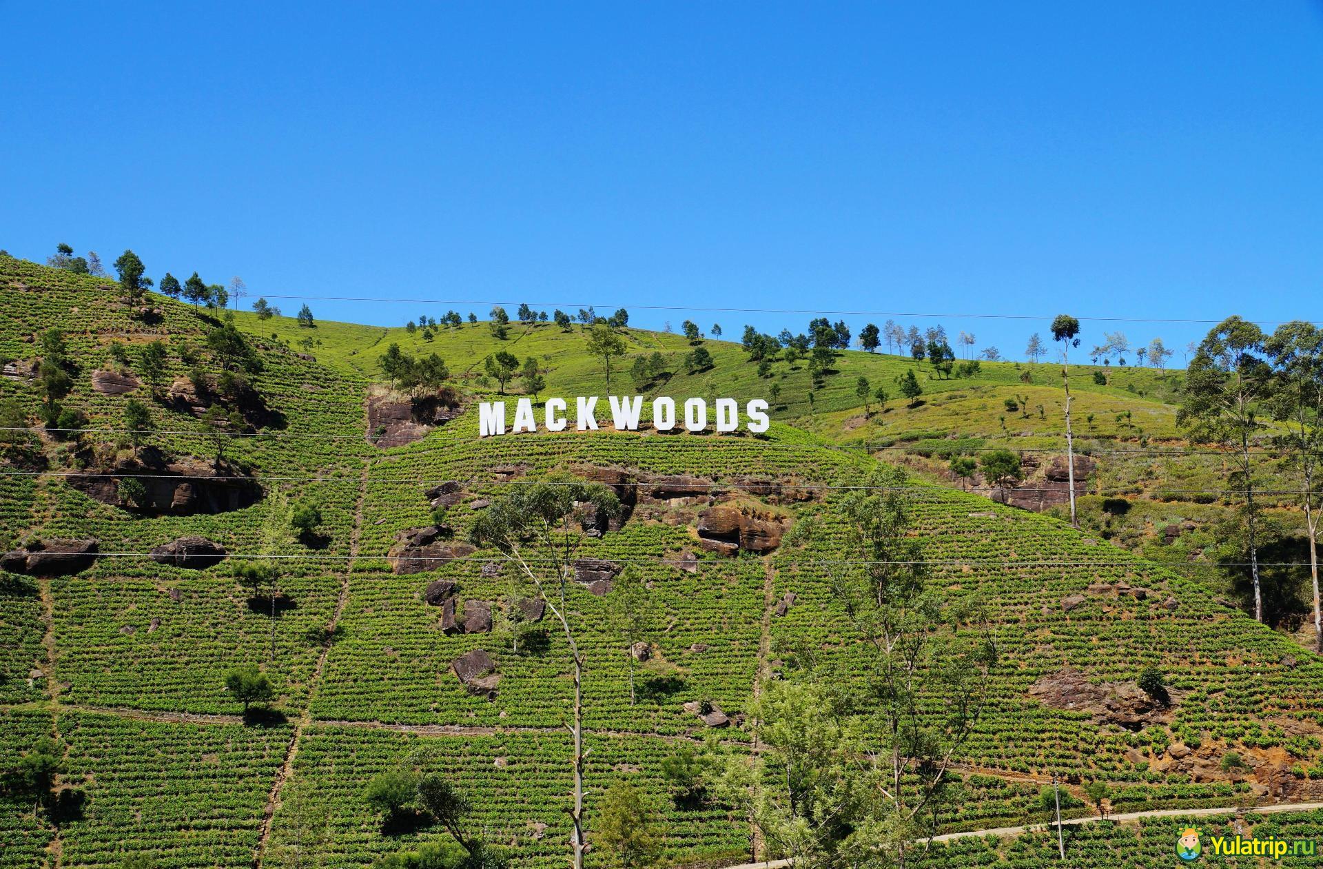 mackwoods шри ланка