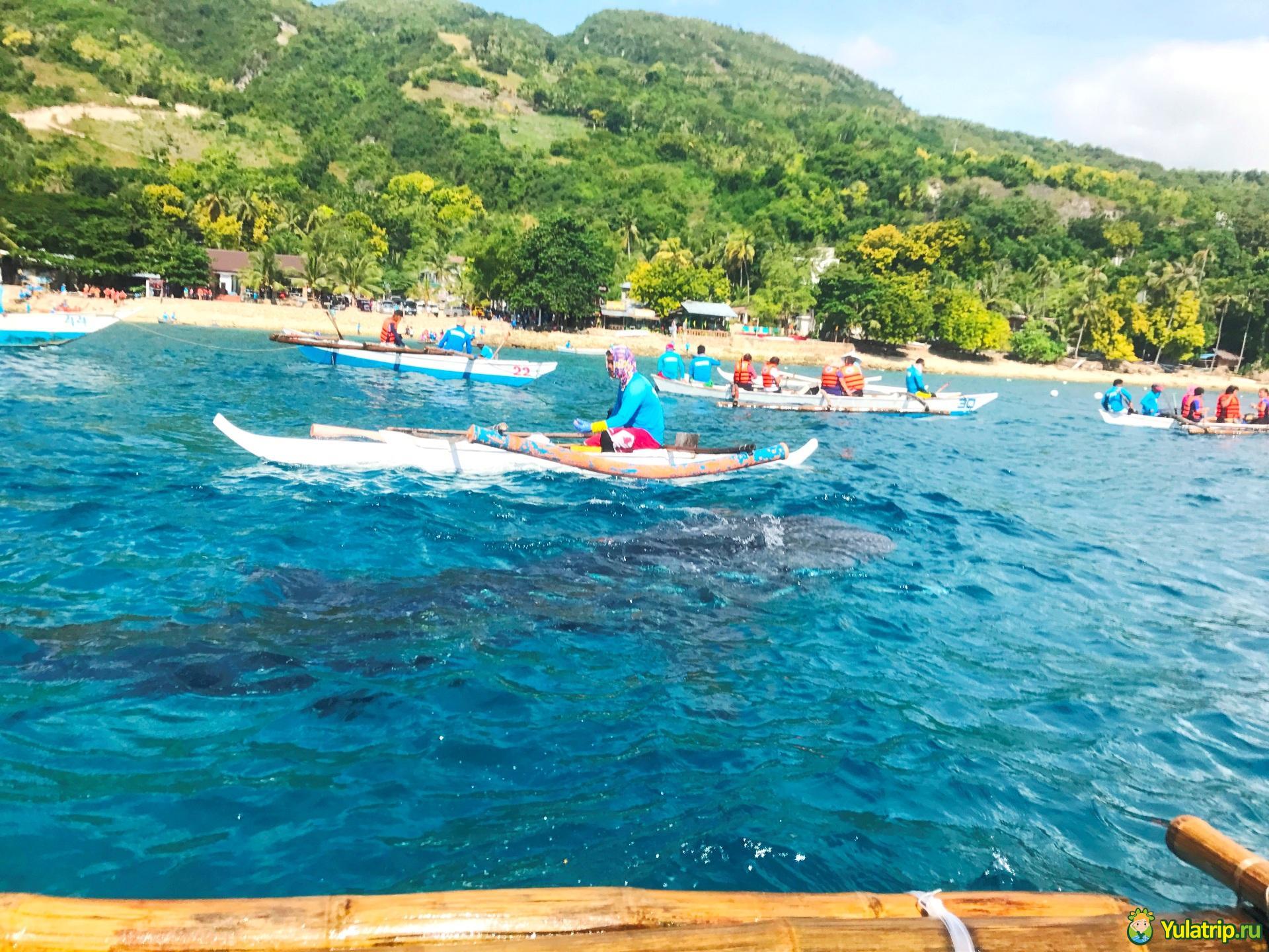 плавание с китовыми акулами на филиппинах в ослобе