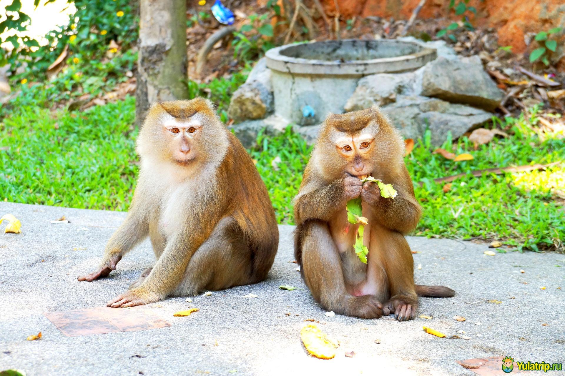 гора обезьян monkey hill пхукет